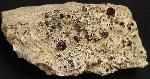 Earth Treasures USA Massachusetts 6.5 Inches Long 1 Pound 12.8 Oz Garnet Spessartine Rare Mineral Specimen